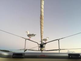 Seagulls on the bow